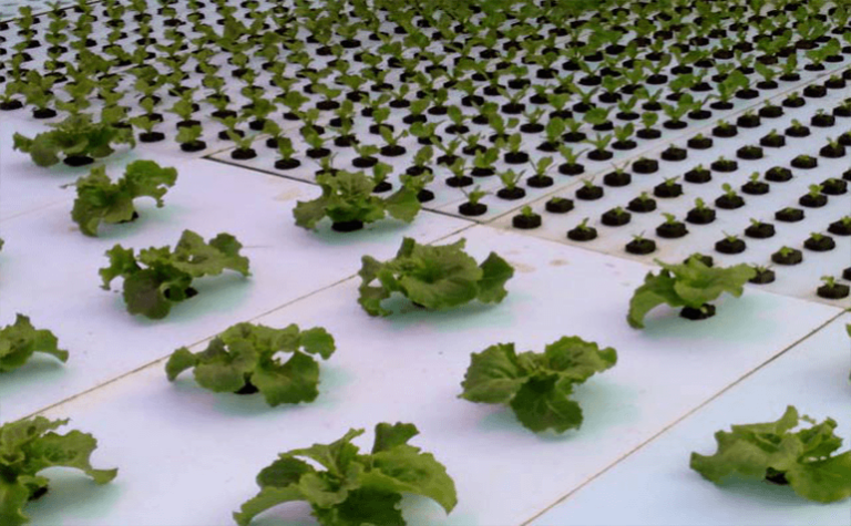 Fifth-Generation Grower Uses LumiGrow to Ramp Up Revenue