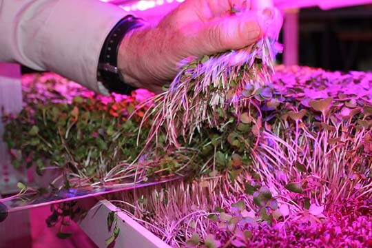 Backed by Industry-Leading Horticultural Research