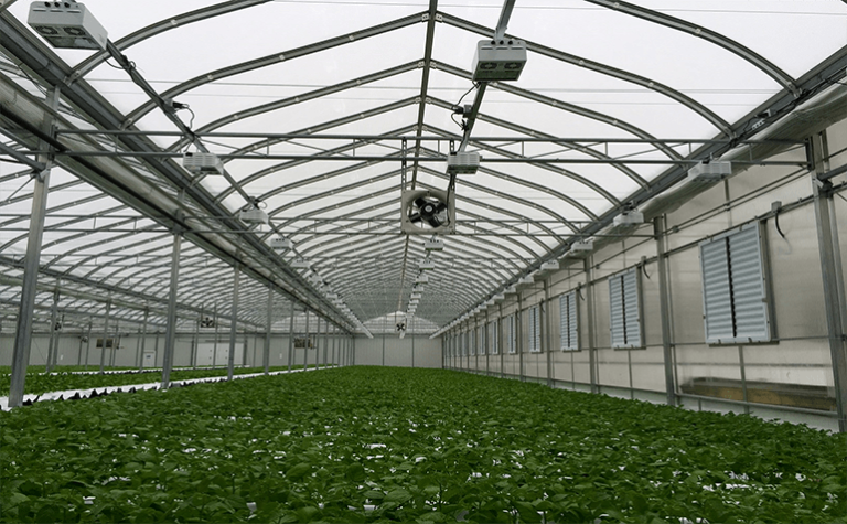 Sklarczyk Seed Farms Sees Savings with Utility Rebate, and Reduced Infrastructure Costs