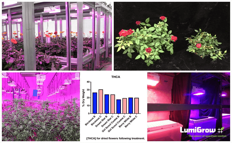 Four New Scientific Posters from LumiGrow Research Show How Spectra Can Influence Plant Characteristics and Commercial Production