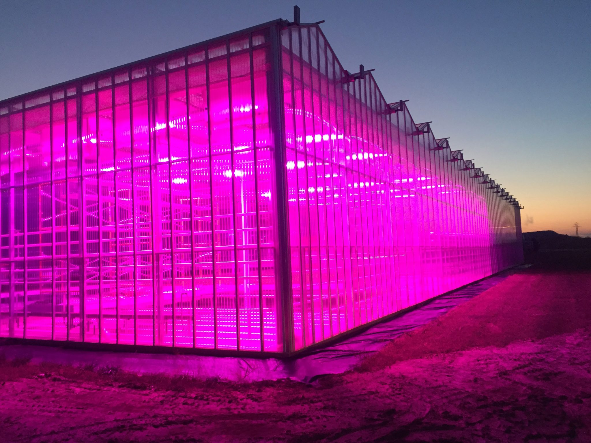 LumiGrow Hosts Webinar Unveiling Grow Light Sensor Demo and Research Findings