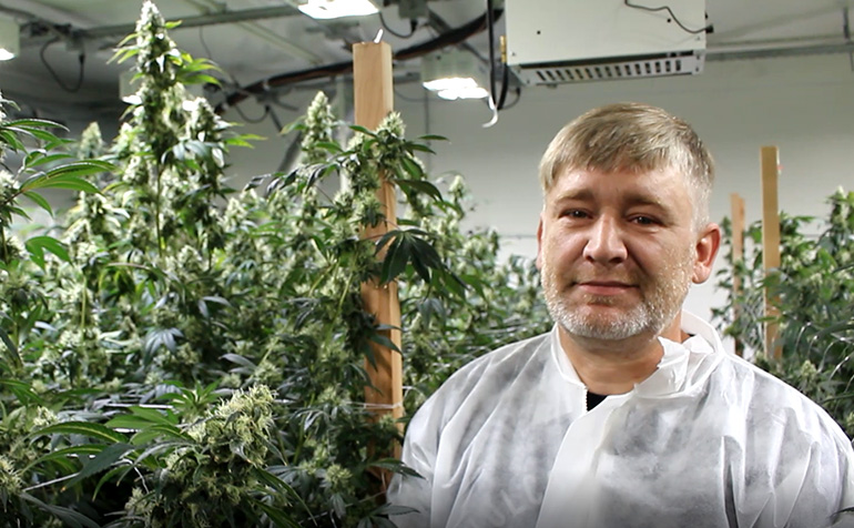 Optimize Your Cannabis Grow for LED – Temperature and CO2 Considerations